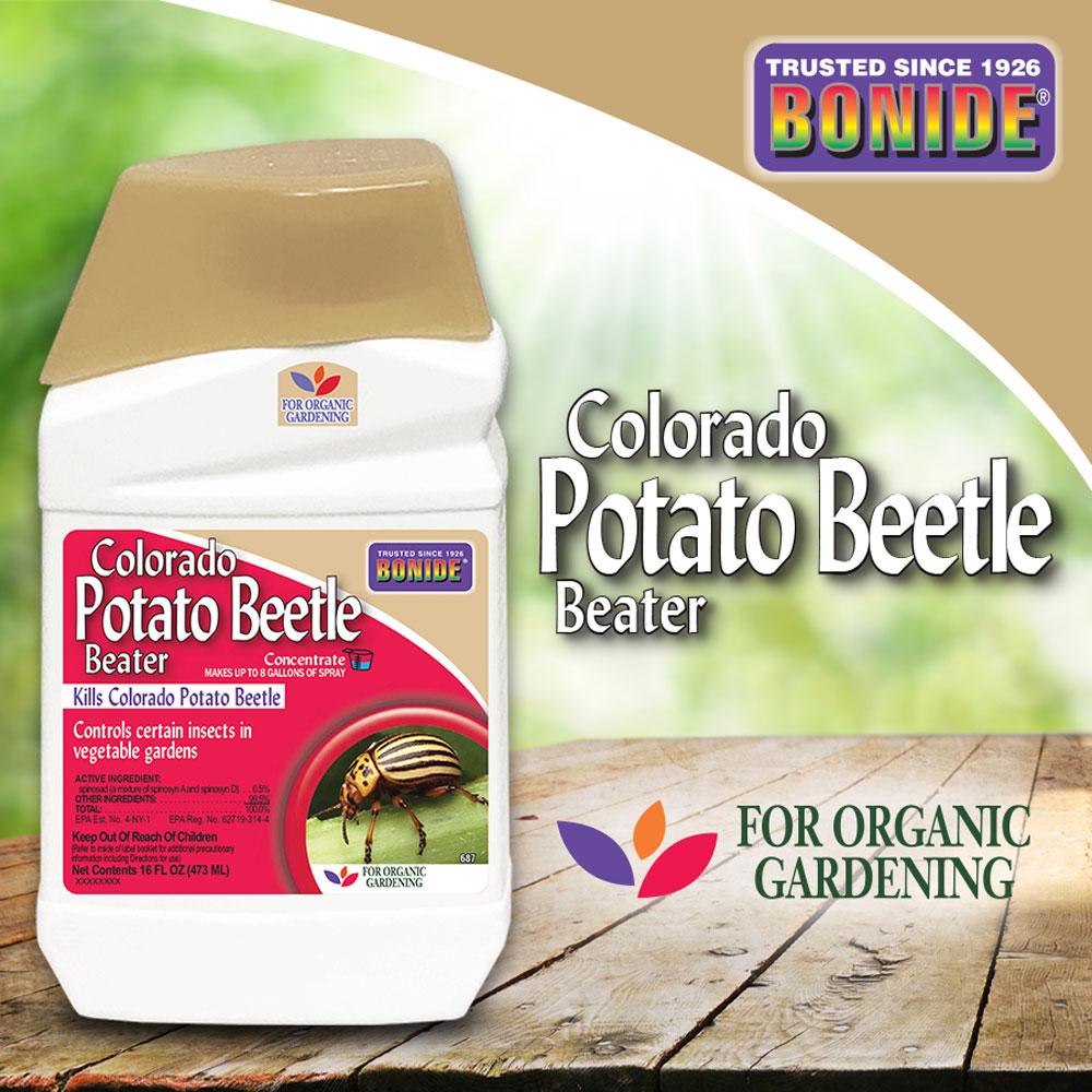 Colorado Potato Beetle Conc