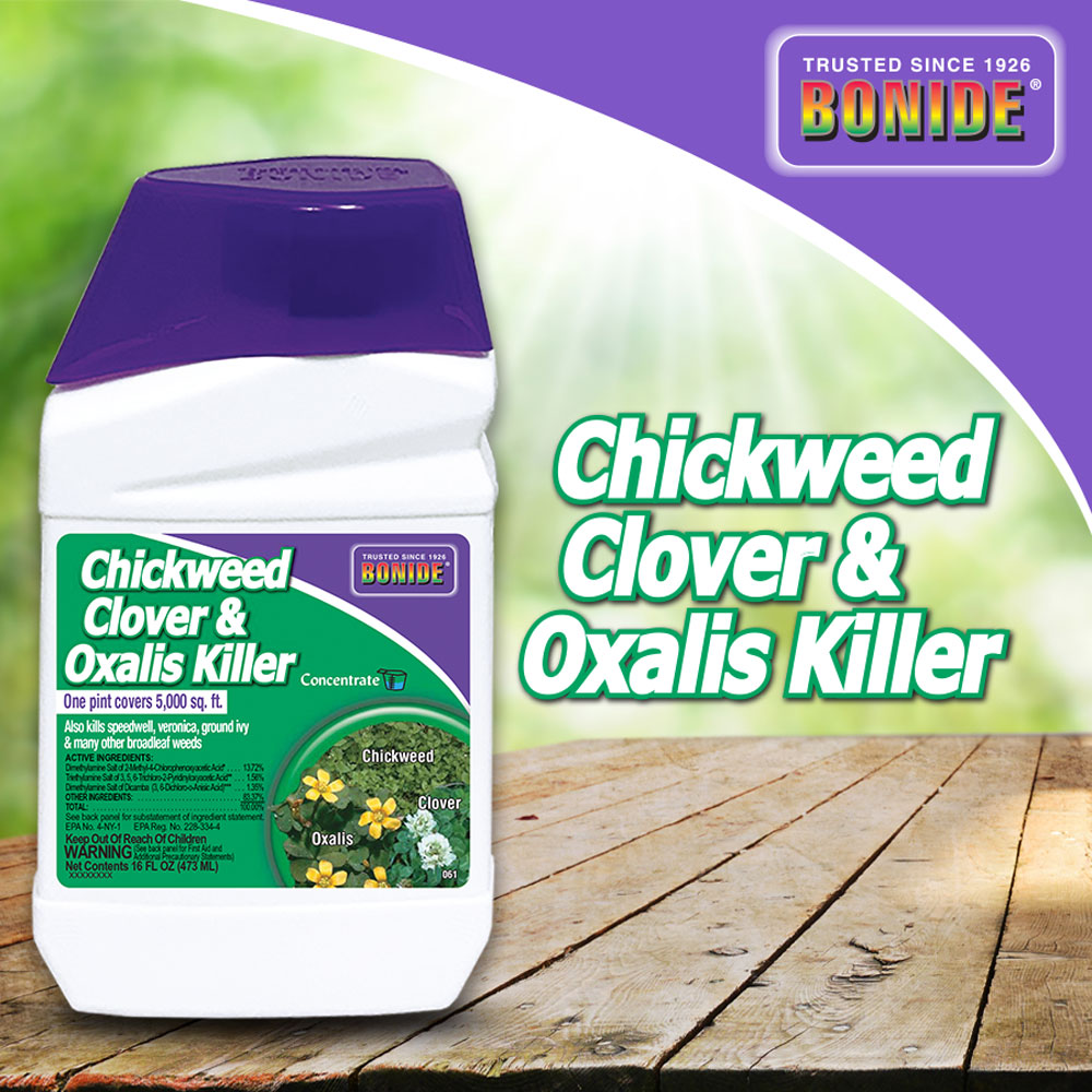 Chickweed, Clover, & Oxalis Killer Conc